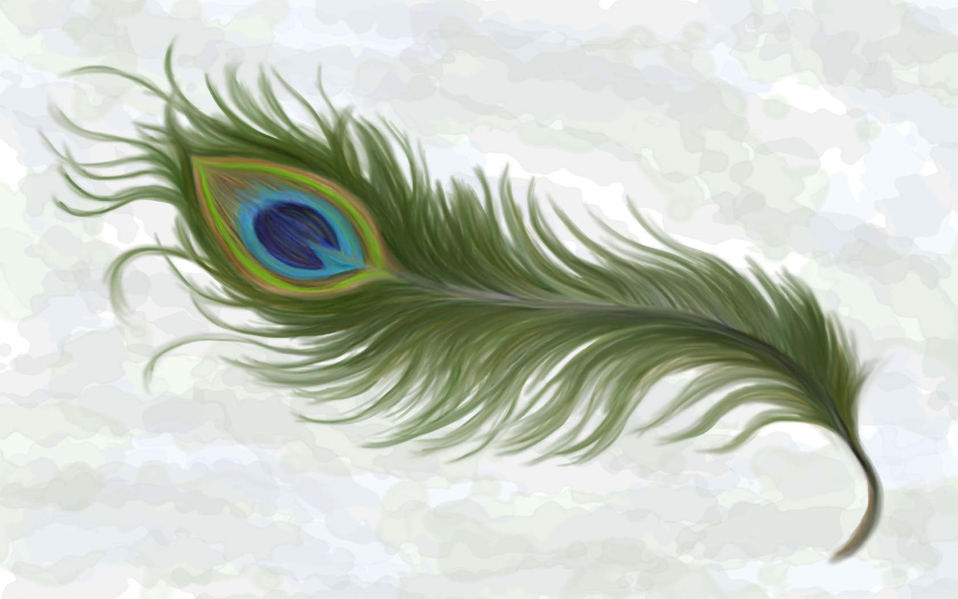 Pin Peacock Feather Wallpaper 1920x1200