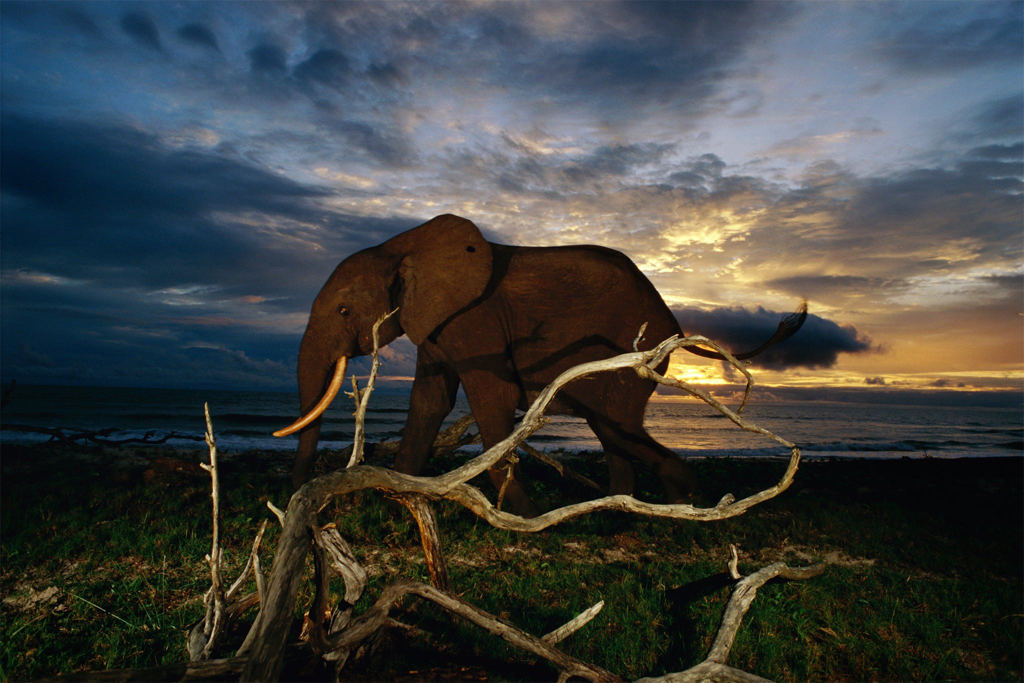 Gabon Ground Zero for Forest Elephants National Geographic 2048x1366