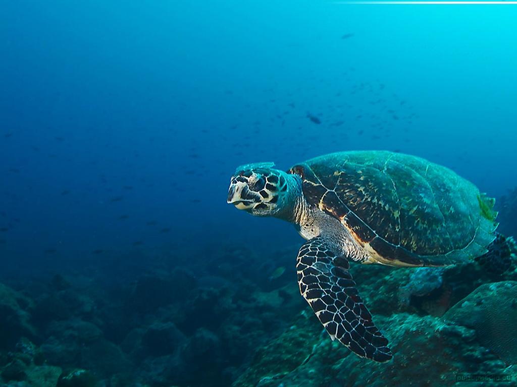 deep ocean desktop wallpaper - photo #23