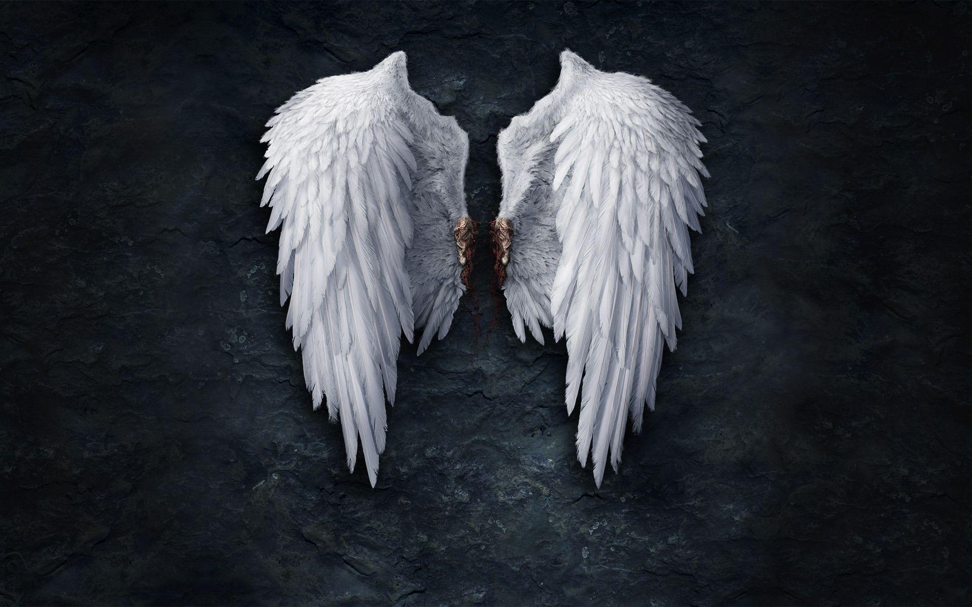 Broken angel wings Wallpaper 1456 1920x1200