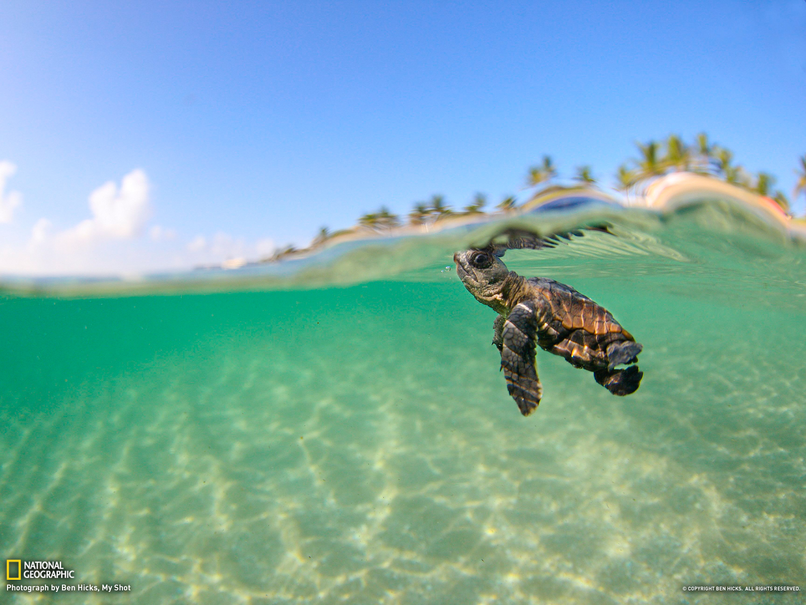 46 Sea Turtles Desktop Wallpaper On Wallpapersafari