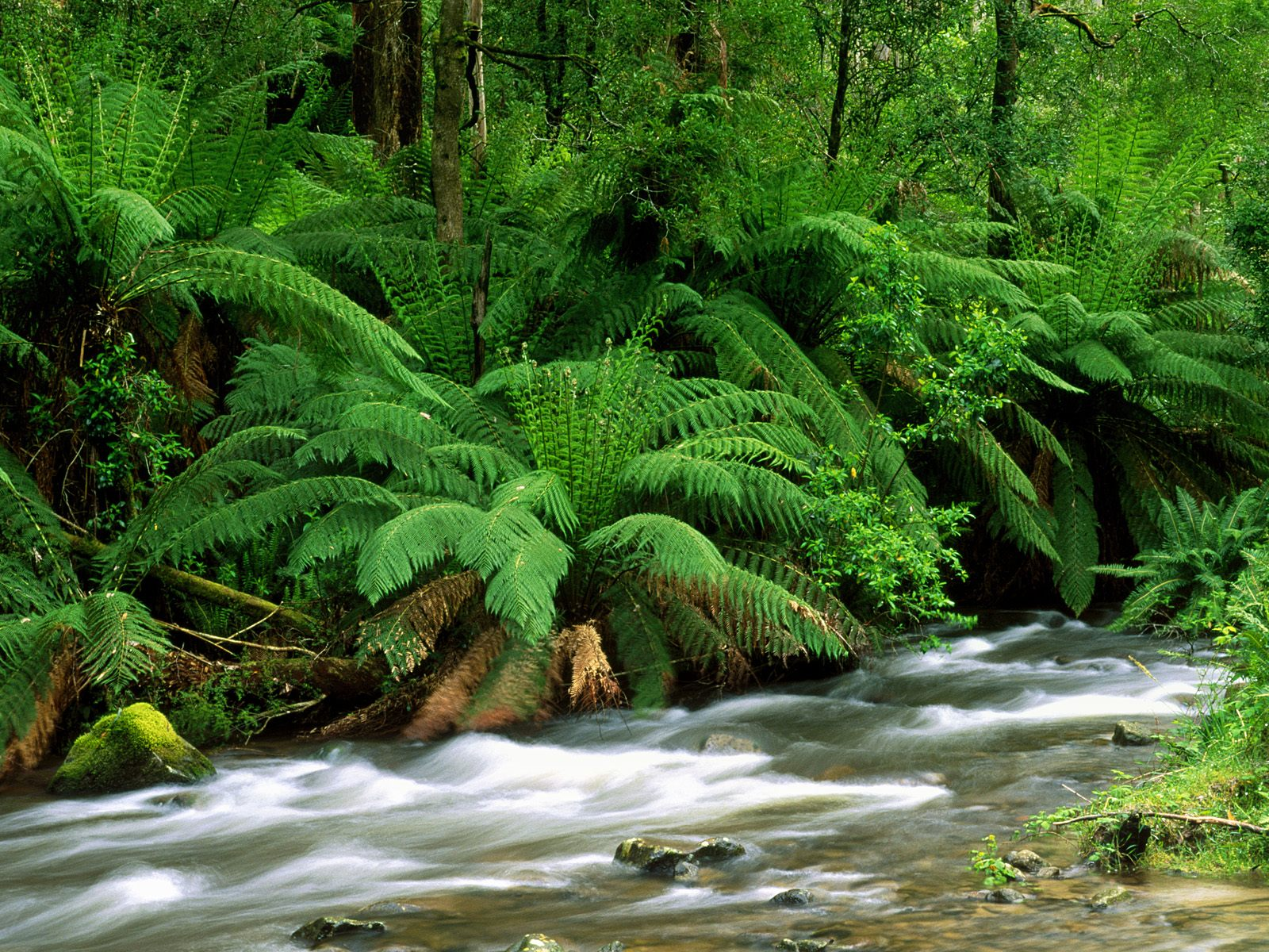 Yarra Ranges National Park Australia Wallpapers HD Wallpapers 1600x1200