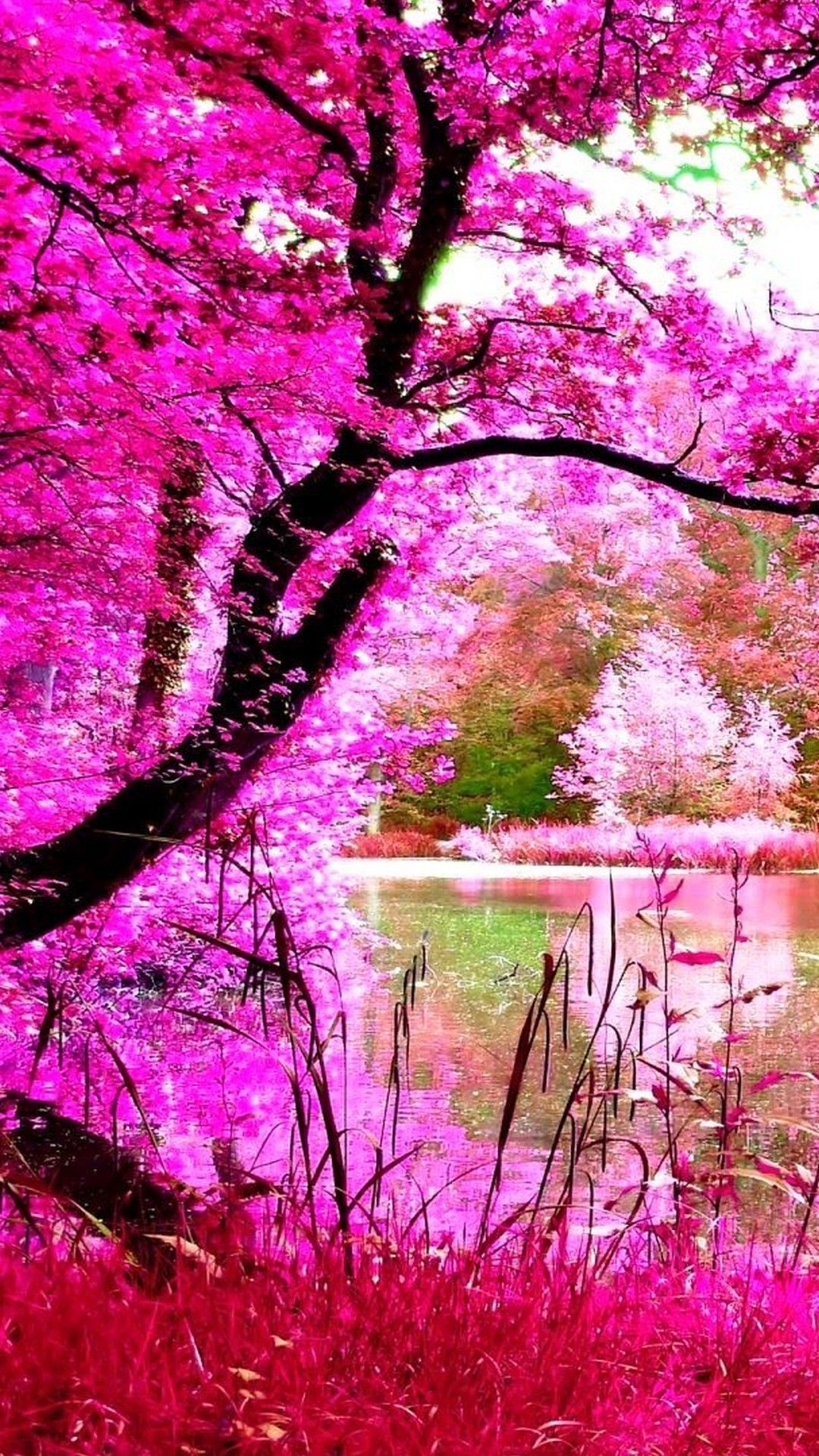 Beautiful Pink Nature Iphone Wallpaper   Pink Nature Wallpaper Hd 1080x1920