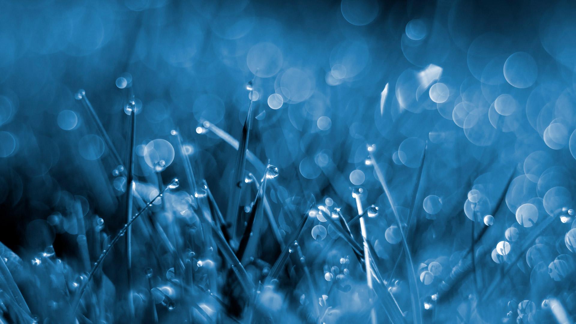 1920x1080px Blue Grass Wallpaper - WallpaperSafari