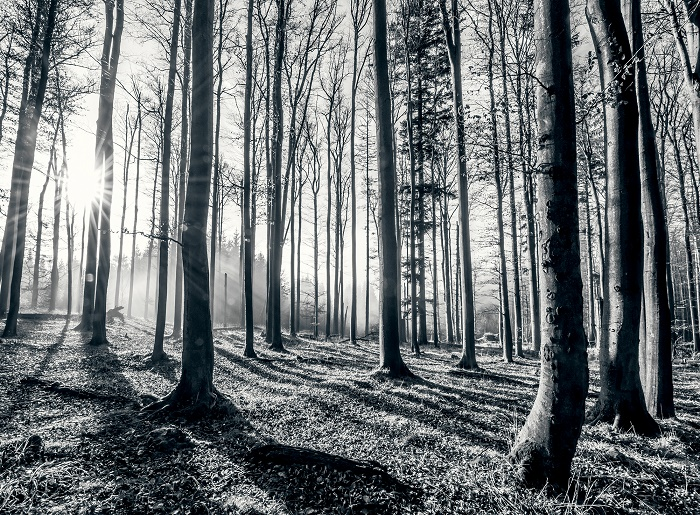 Black and white forest wallpaper murals Online store 700x515