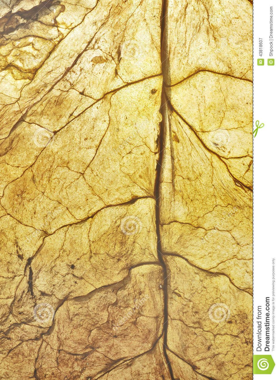 Dry leaf background HI Cleveland TN in 2019 Leaf background 954x1300