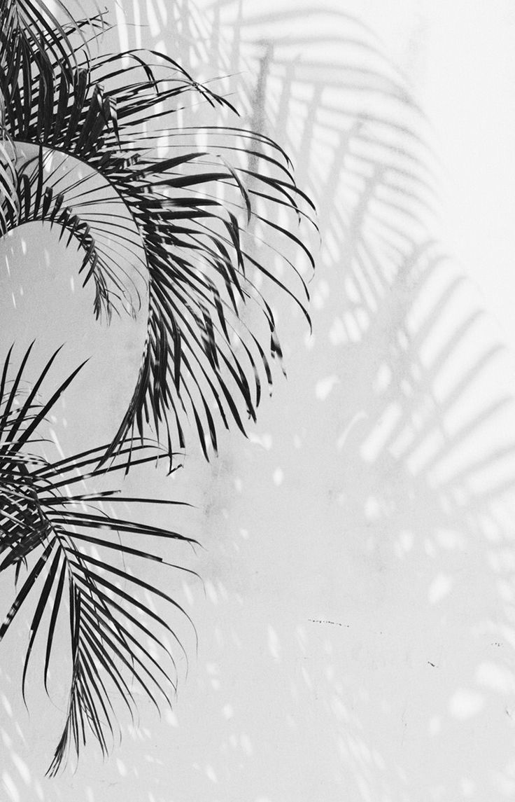 photography   simply aesthetic Plants White aesthetic 736x1145