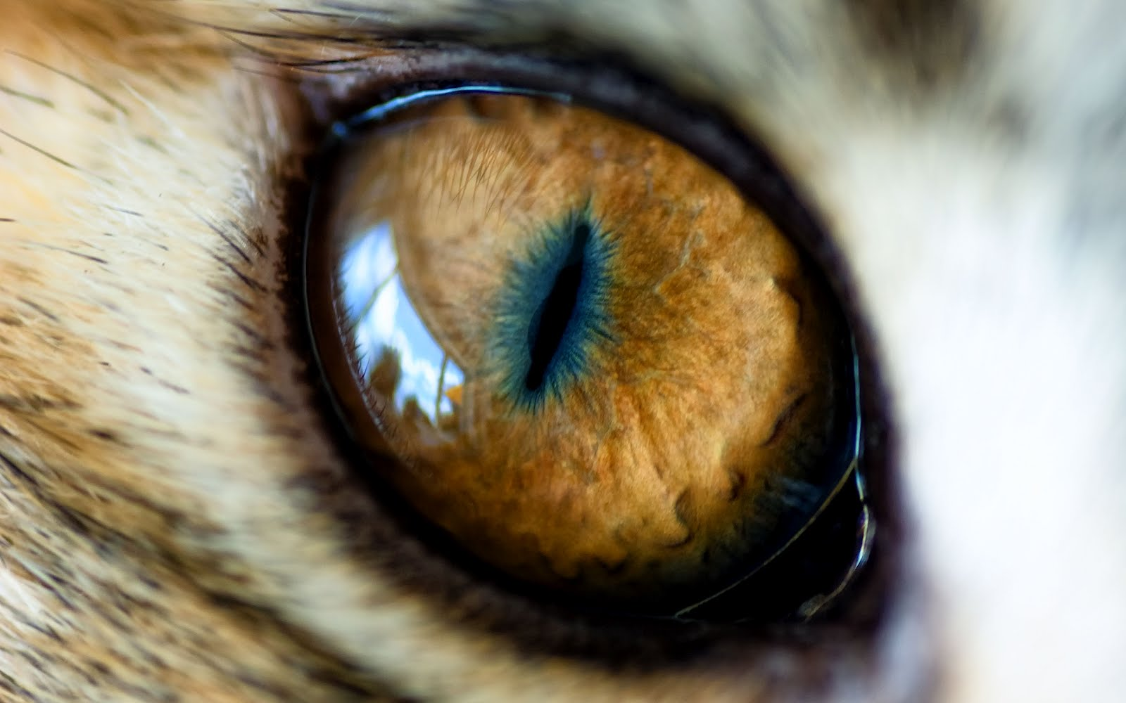 Wallpapers Animal   Eye of The Tiger 1600x1000