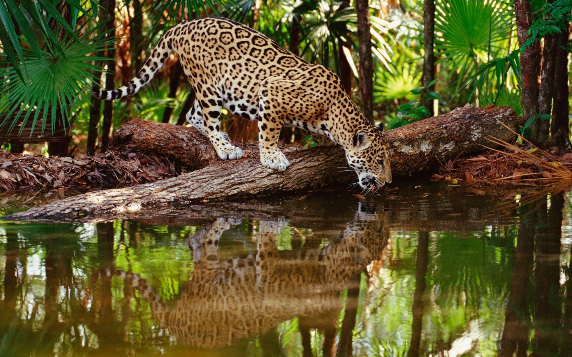 Wildlife HD Desktop Wallpapers   Top Wildlife HD Desktop 1920x1200