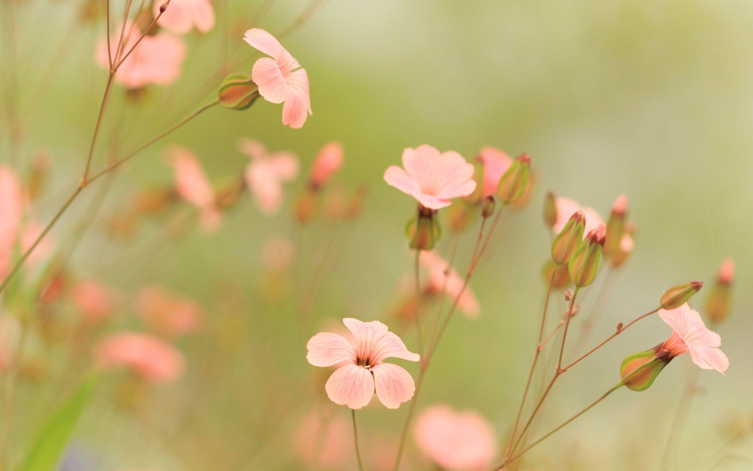 Summer Flowers Wallpapers   Summer Flowers Desktop Background 2560x1600