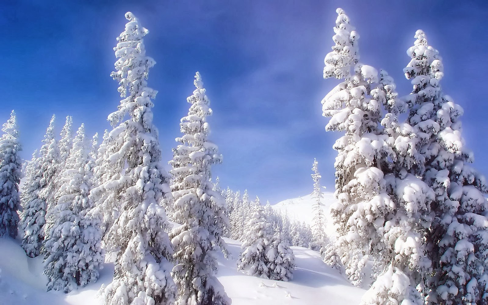 Snow Fall Winter HD Wallpapers   HD Wallpapers Blog 1600x1000