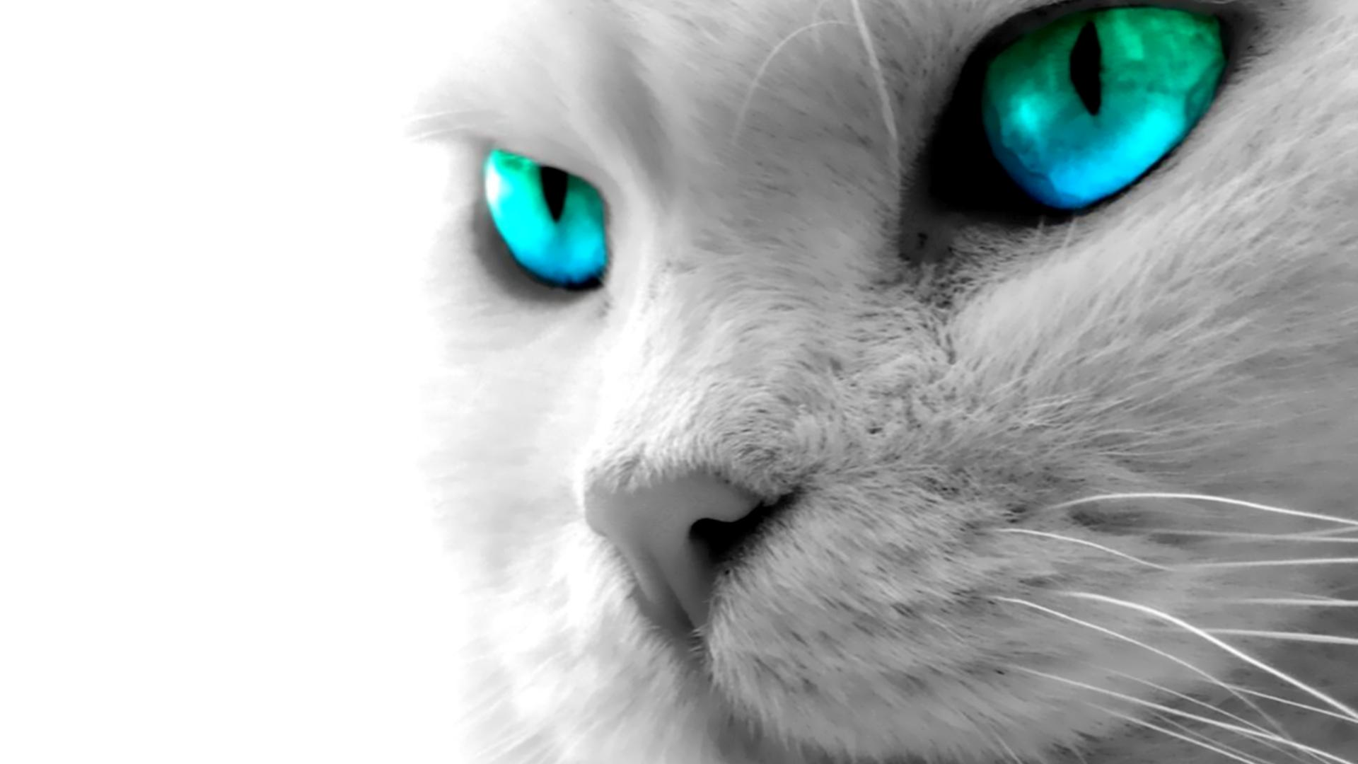 Hd wallpaper eyes - Cat Blue Eyes High Definition Wallpaper 1920x1080 Full Hd Wallpapers