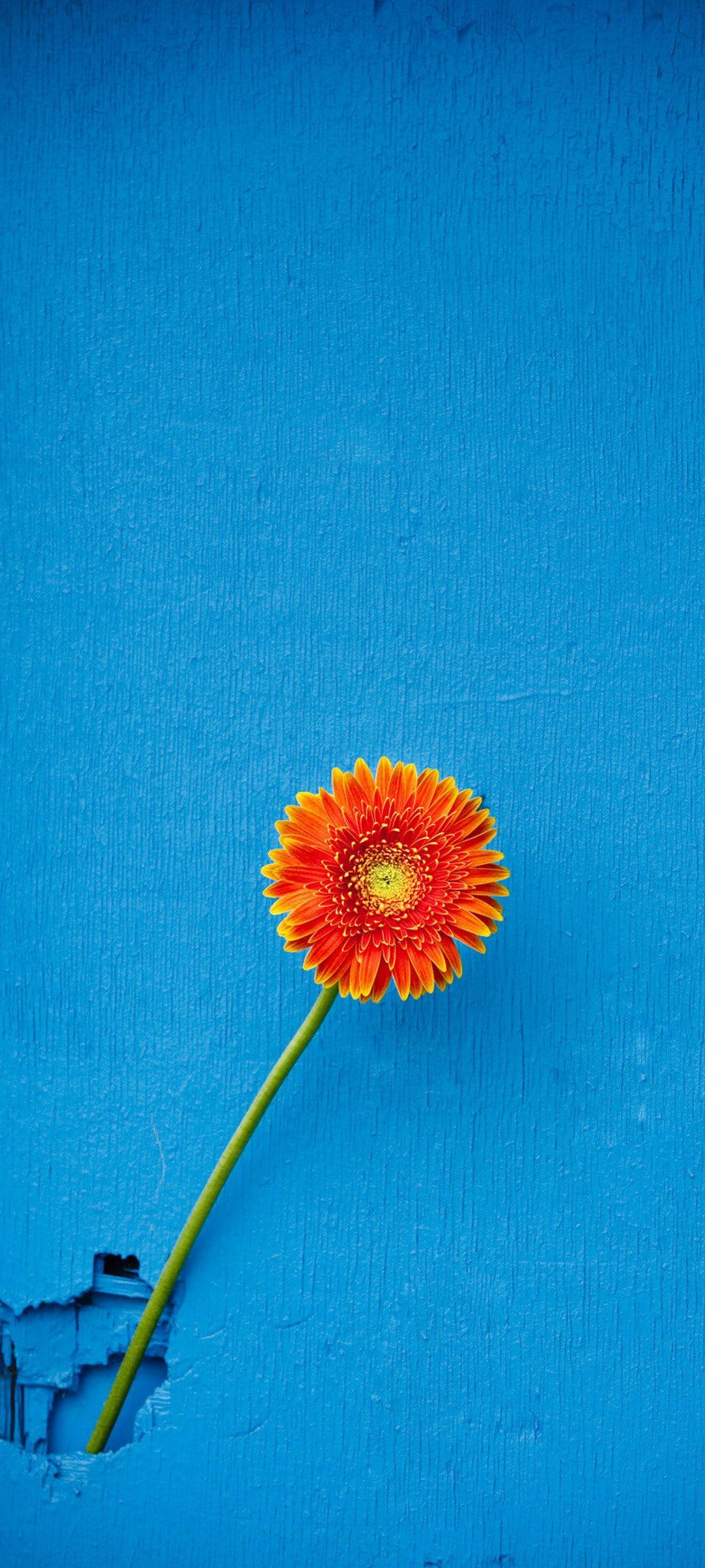 Texture Back Orange Flower   [1080x2400] Fondos de pantalla 1080x2400