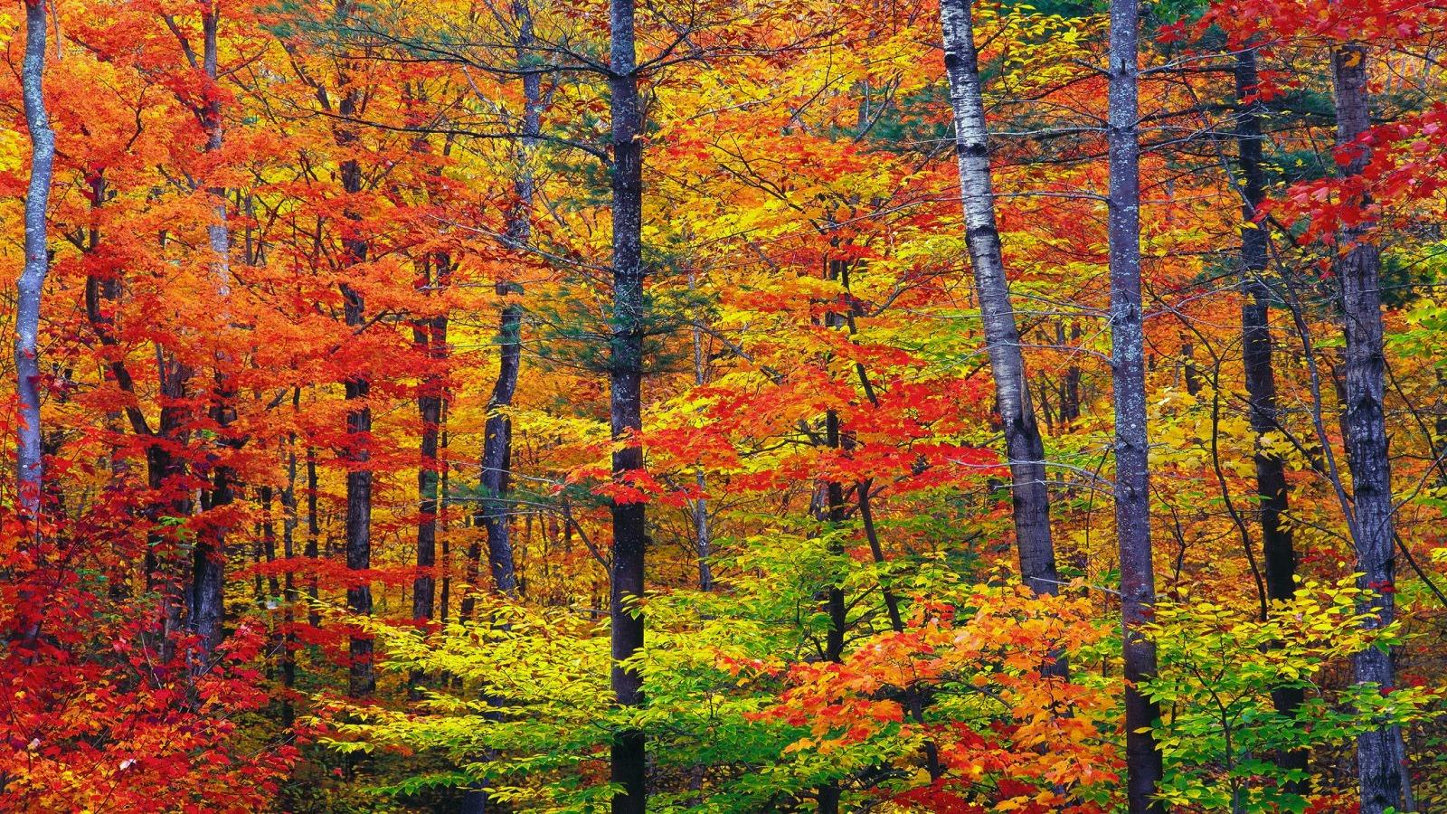 vibrant_autumn_colors_wallpaper_autumn_nature_wallpaper_1600_900 ...