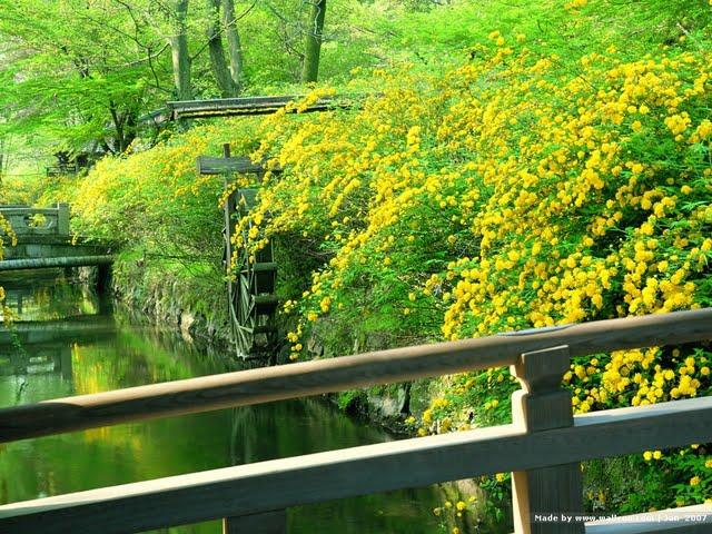 Kyoto Japanese Garden wallpapersJapanese Garden in Kyoto Zen Garden 640x480