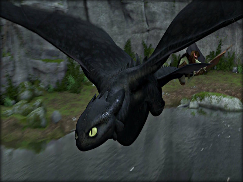 Toothless   Toothless the Dragon Wallpaper 32987046 800x600