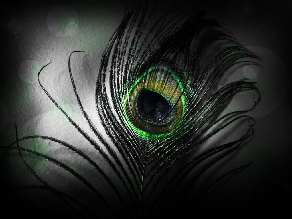 Peacock Feather Wallpapers 1024x768