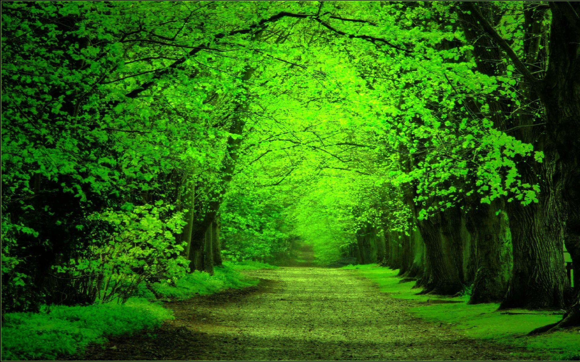 Green Forest Background Wallpapersafari