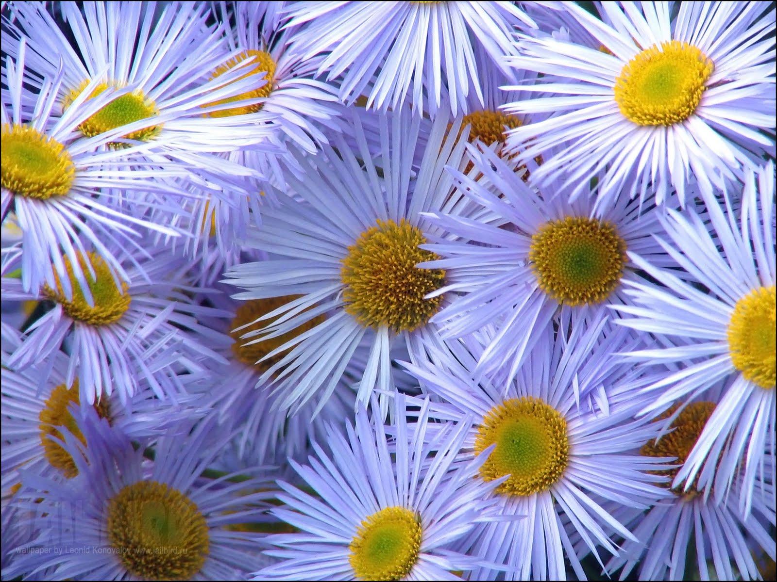 Desktop Backgrounds Wallpapers Flowers