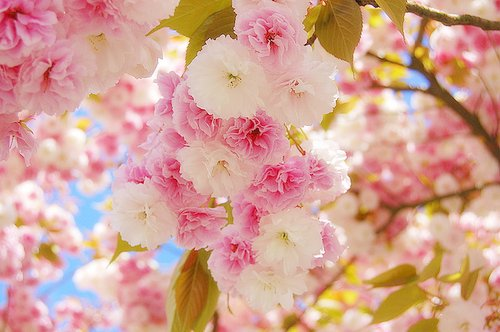 cute pretty flowers wallpapers  wallpapersafari, Beautiful flower