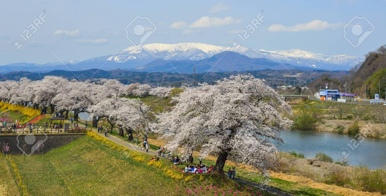 Miyagi Japan   Apr 14 2019 Cherry Blossom With Zao Mountain 1300x660