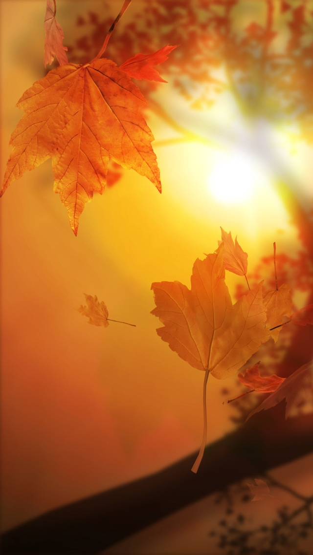 fall wallpaper for iphone fall wallpaper iphone 5 wallpapersafari 2177