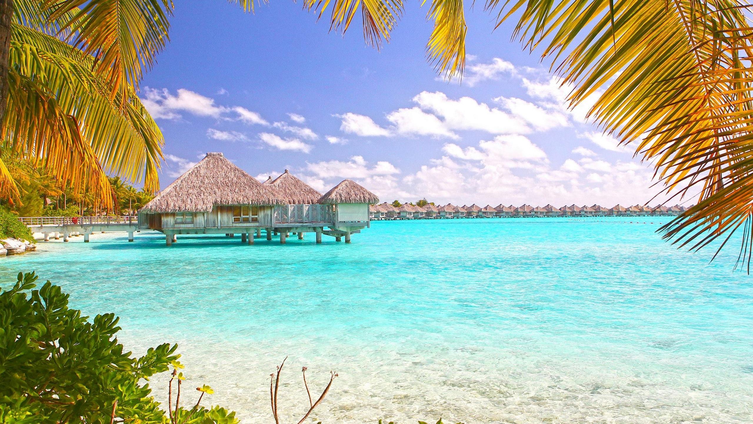 Tropical Beach Bora Bora Polynesia Desktop Wallpaper 2560x1440