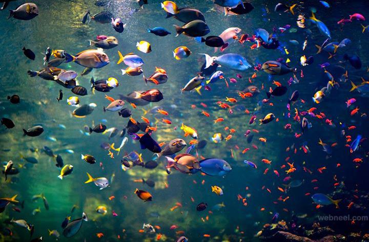 colorful underwater fish View all underwater photography underwater 720x473