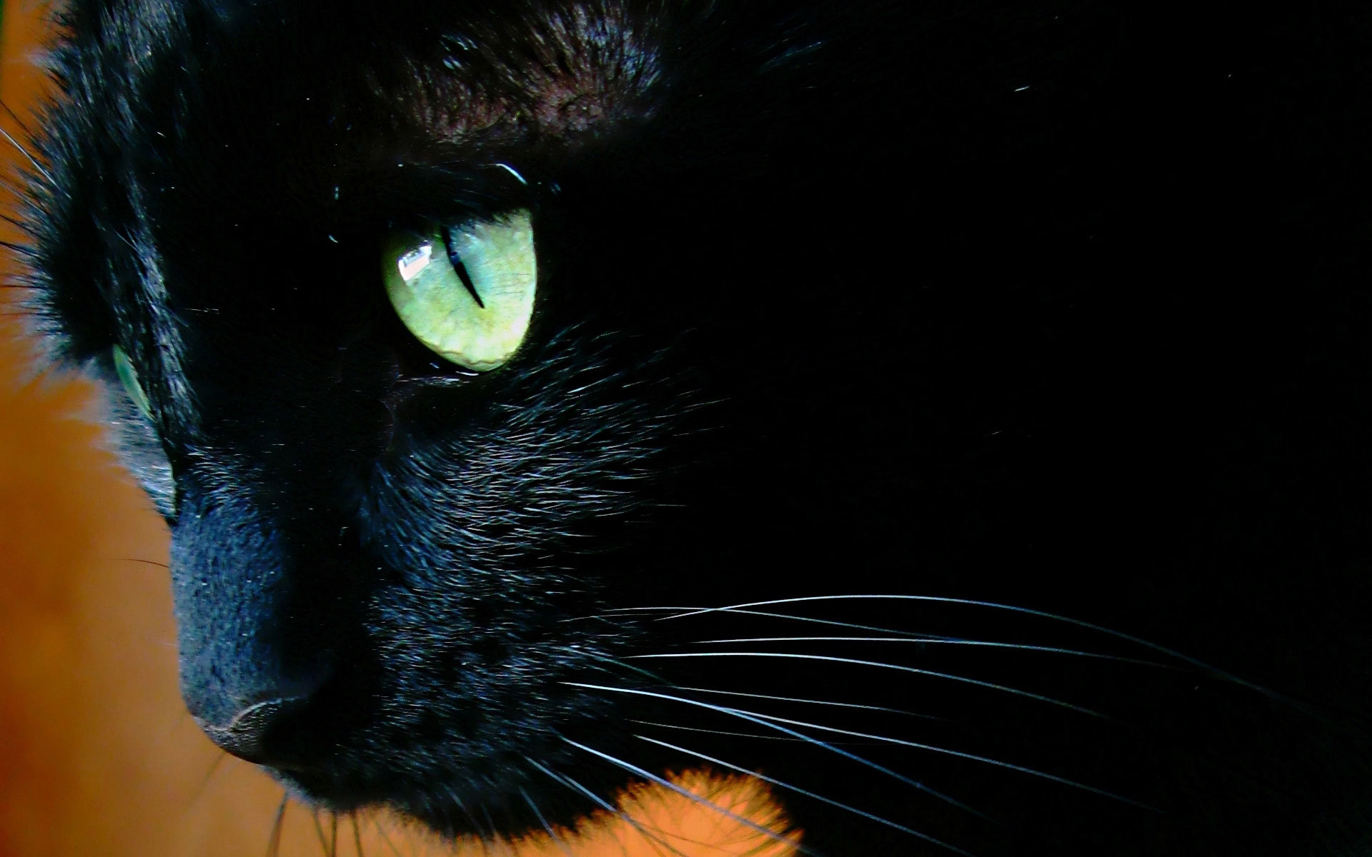Black Cat Eyes Wallpaper: Black Cat Eyes Wallpaper