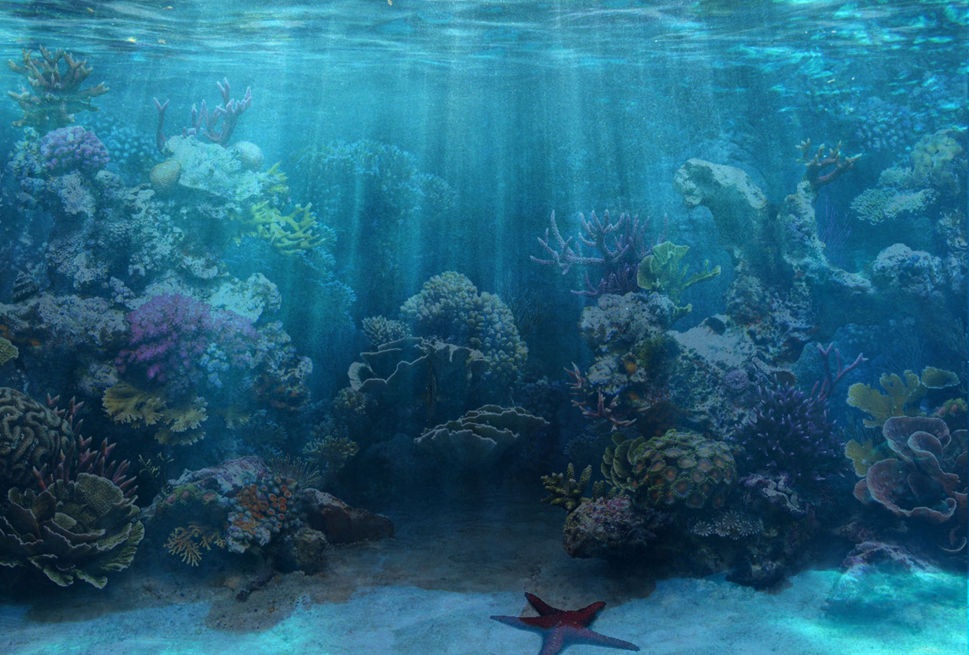 Paradise Reef   Exotic Salt Water Fish Aquariums Corals 1920x1297