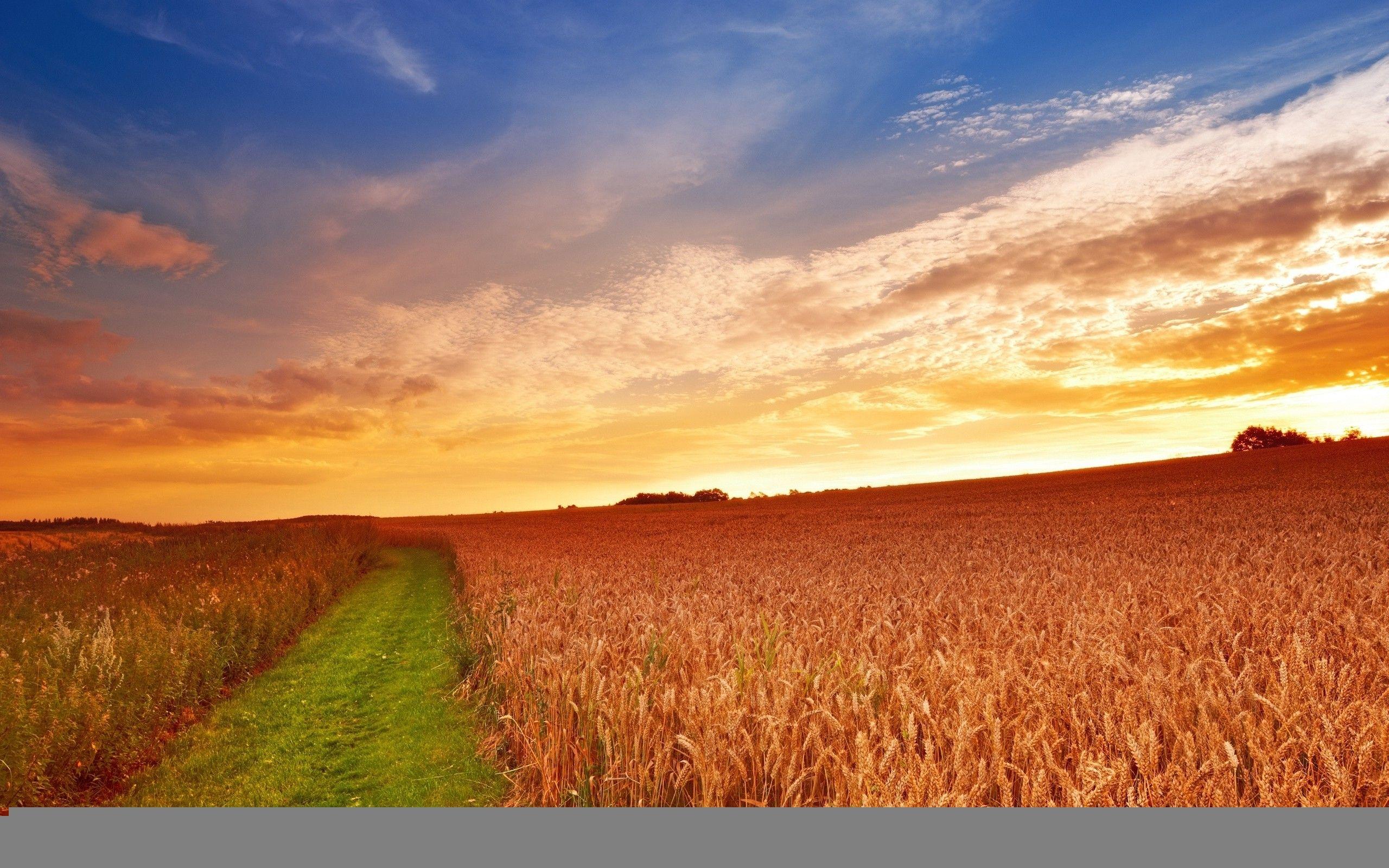 Farm Wallpapers   Top Farm Backgrounds   WallpaperAccess 2560x1600