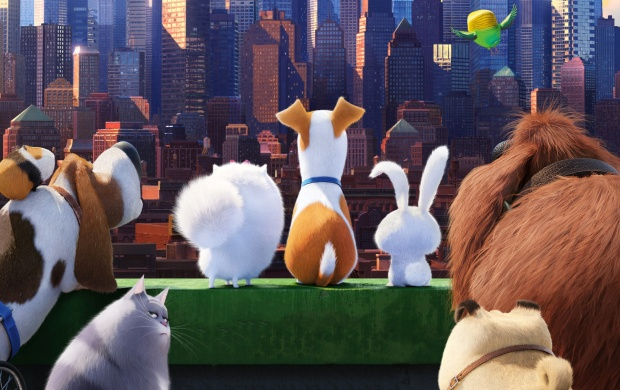 The Secret Life Of Pets Movie click to view 620x390
