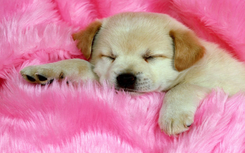 wallpaper dog pink desktop wallpapers 2880x1800 2880x1800