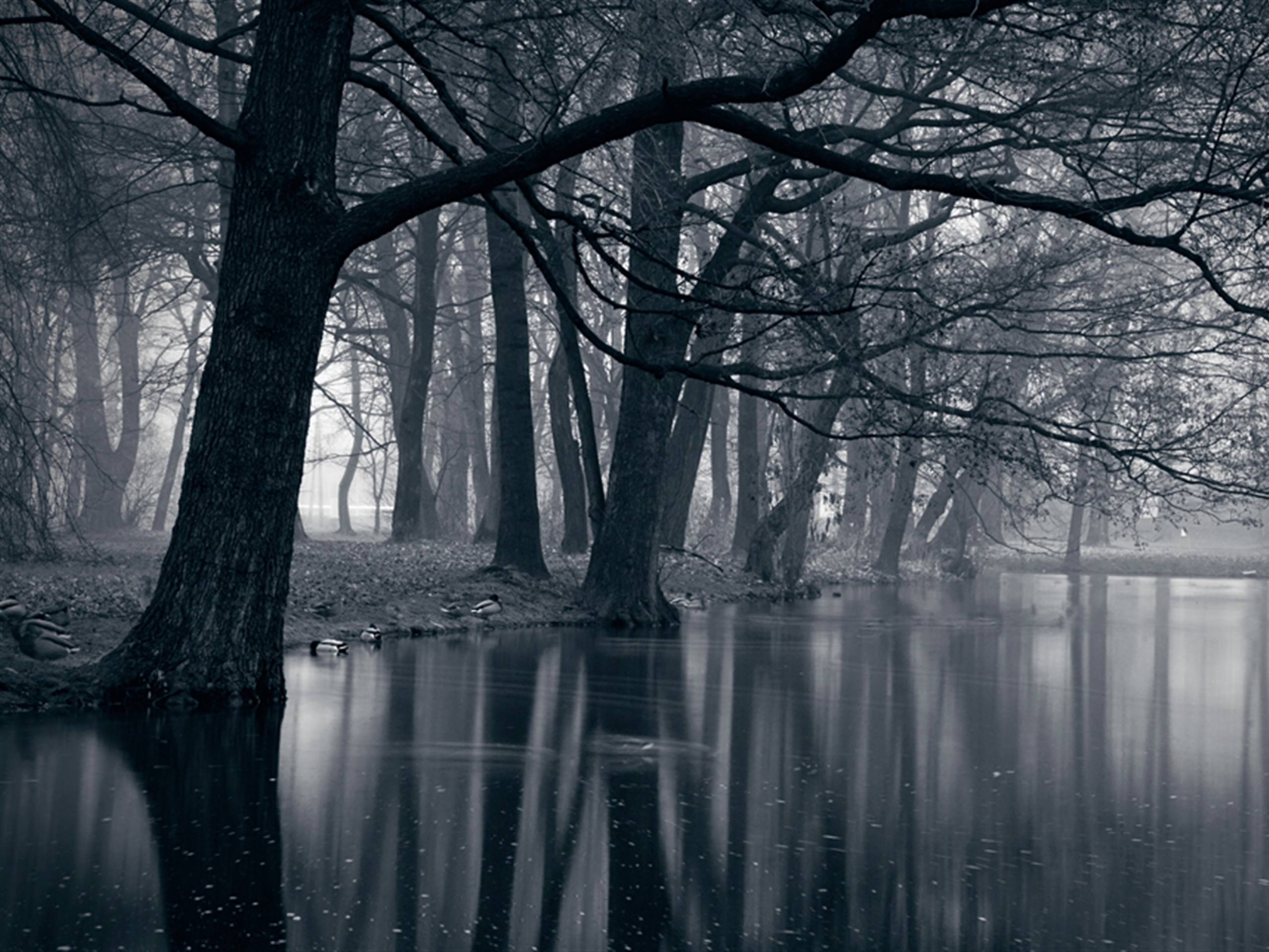 Free Download Mystic Park Dark Forest Sea Wallpapers Mystic Park