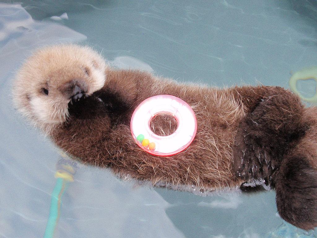 Baby Otter POPSUGAR Pets 1024x768
