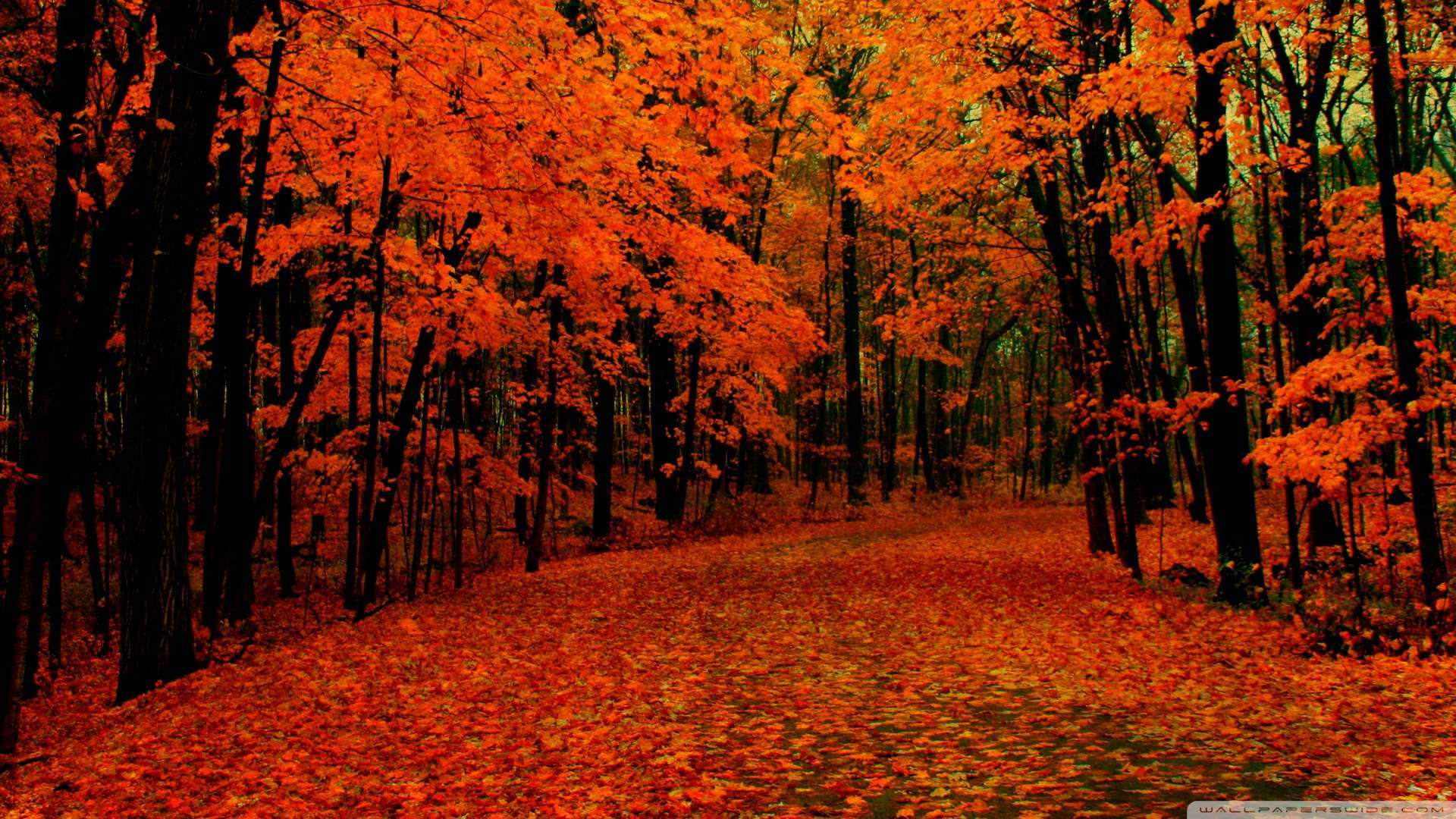 Wallpaper Fall Path Wallpaper 1080p HD Upload at February 2 2014 by 1920x1080