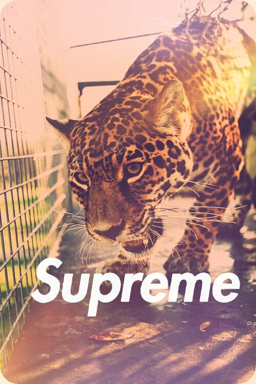 supreme wallpaper Tumblr 500x750