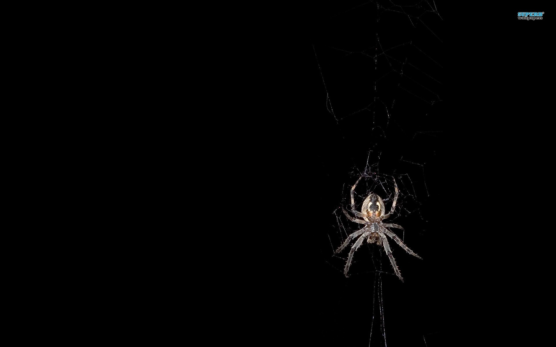 Spider Diving Wallpapers Wallpapers HD