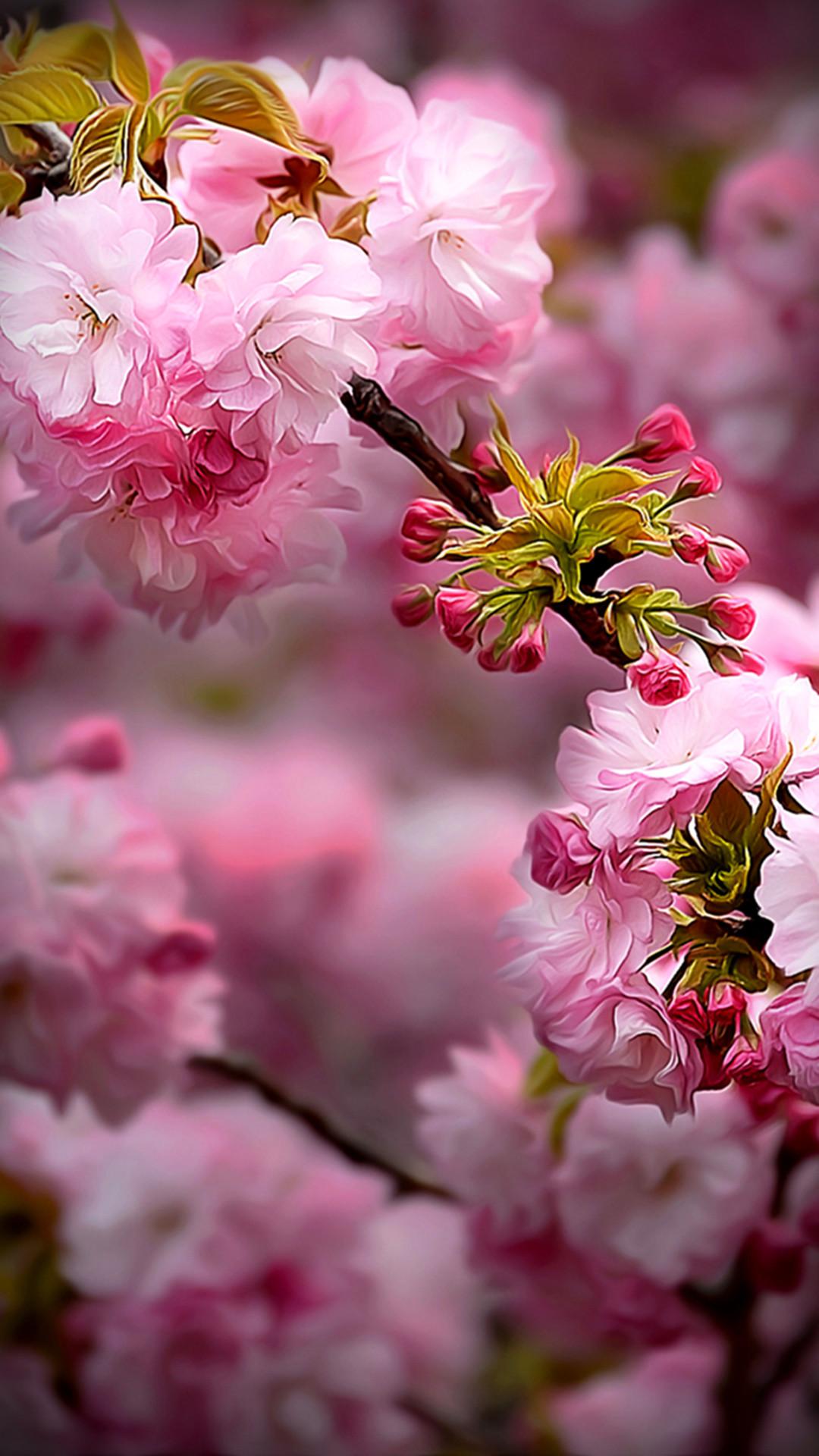 Spring   Hd Phone Wallpaper Flower 151888   HD Wallpaper Download 1080x1920