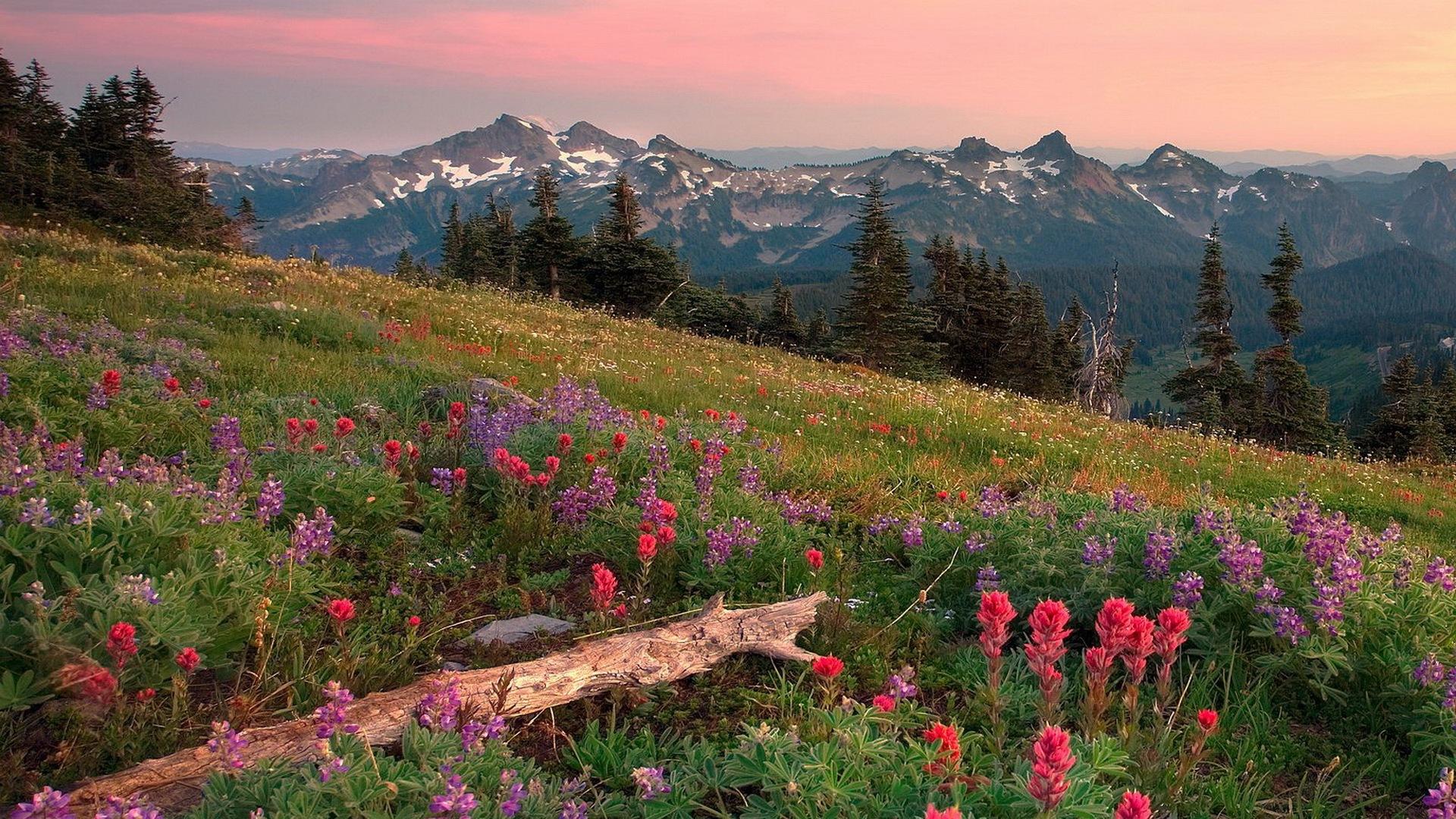 summer landscape image wallpaper - photo #29