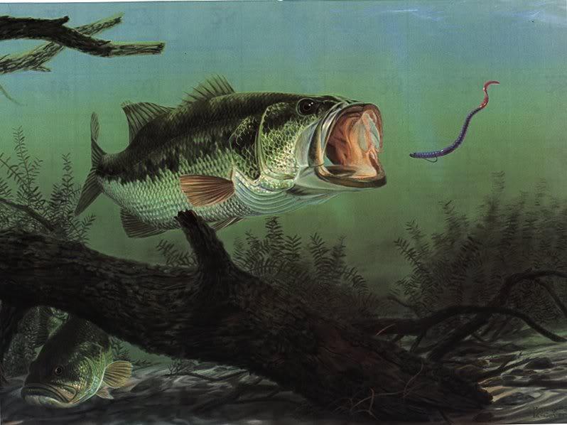 Summer Time Bass Fishing 798x598