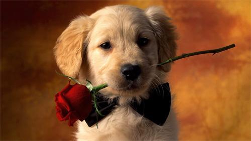 Winter Puppies Wallpaper Romantic puppy wallpaper 500x281