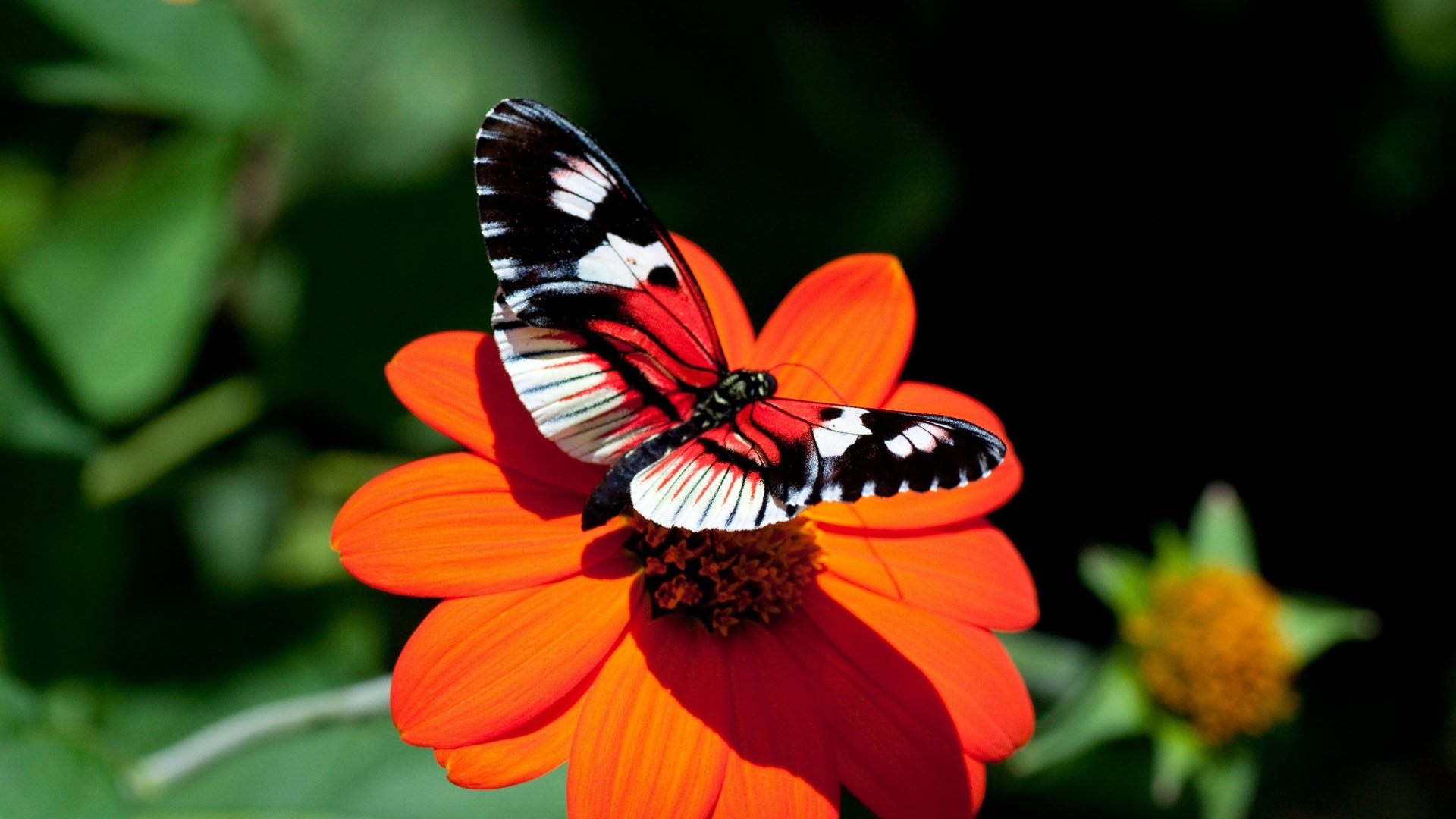 55 Colorful ButterflyHD Images Wallpapers Download 1920x1080