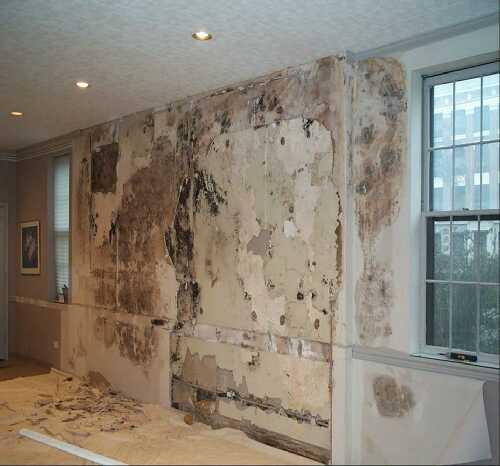 Mold Under Wallpaper Wallpapersafari