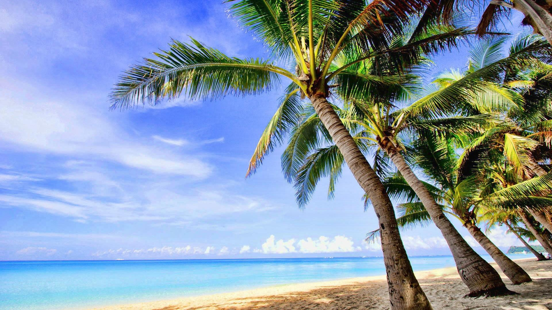 Landscapes tropical palm trees wallpaper 8393 1920x1080