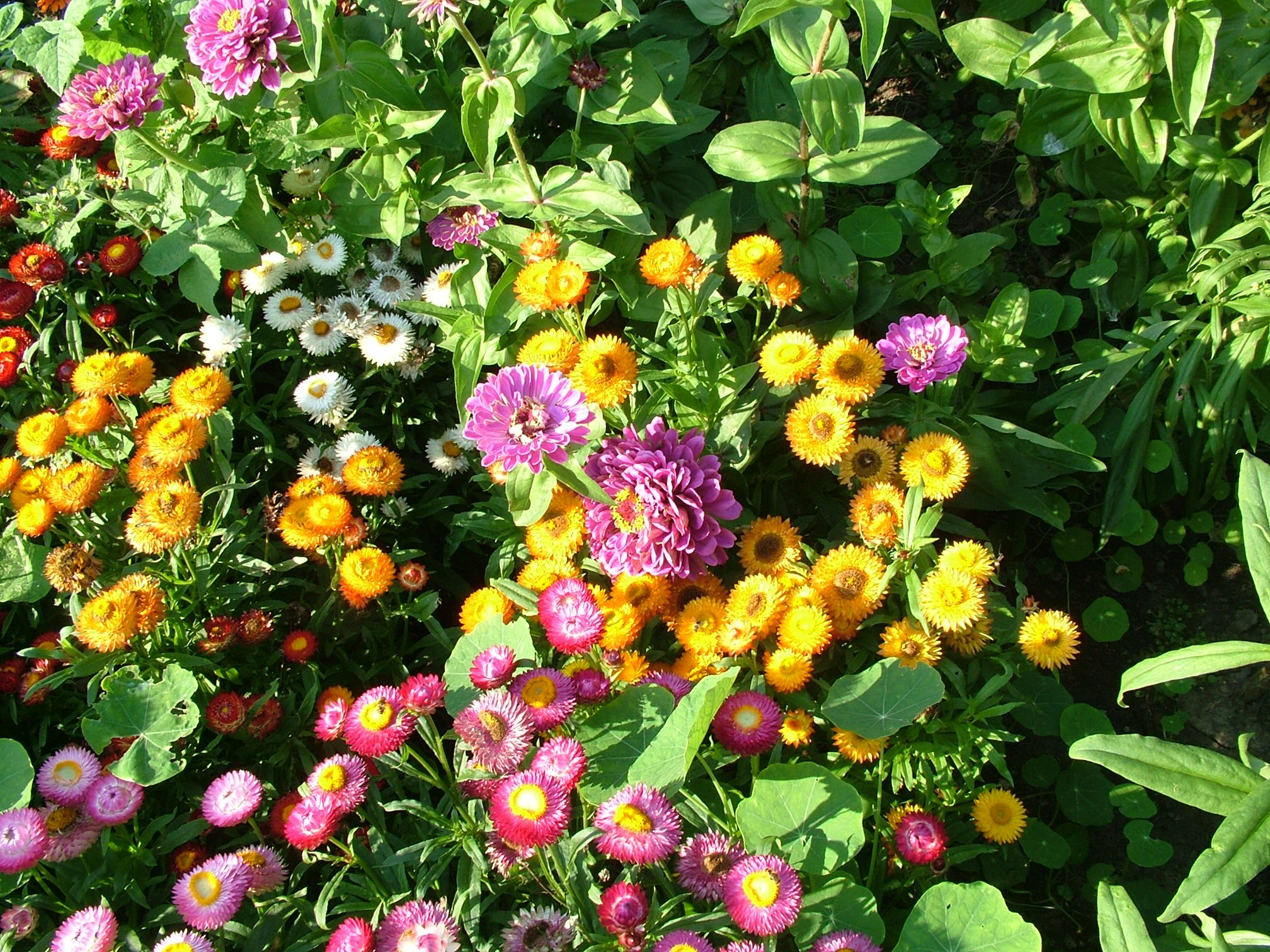 Backgrounds Wallpapers Flowers Desktop Backgrounds Wallpapers Flowers 2016x1512