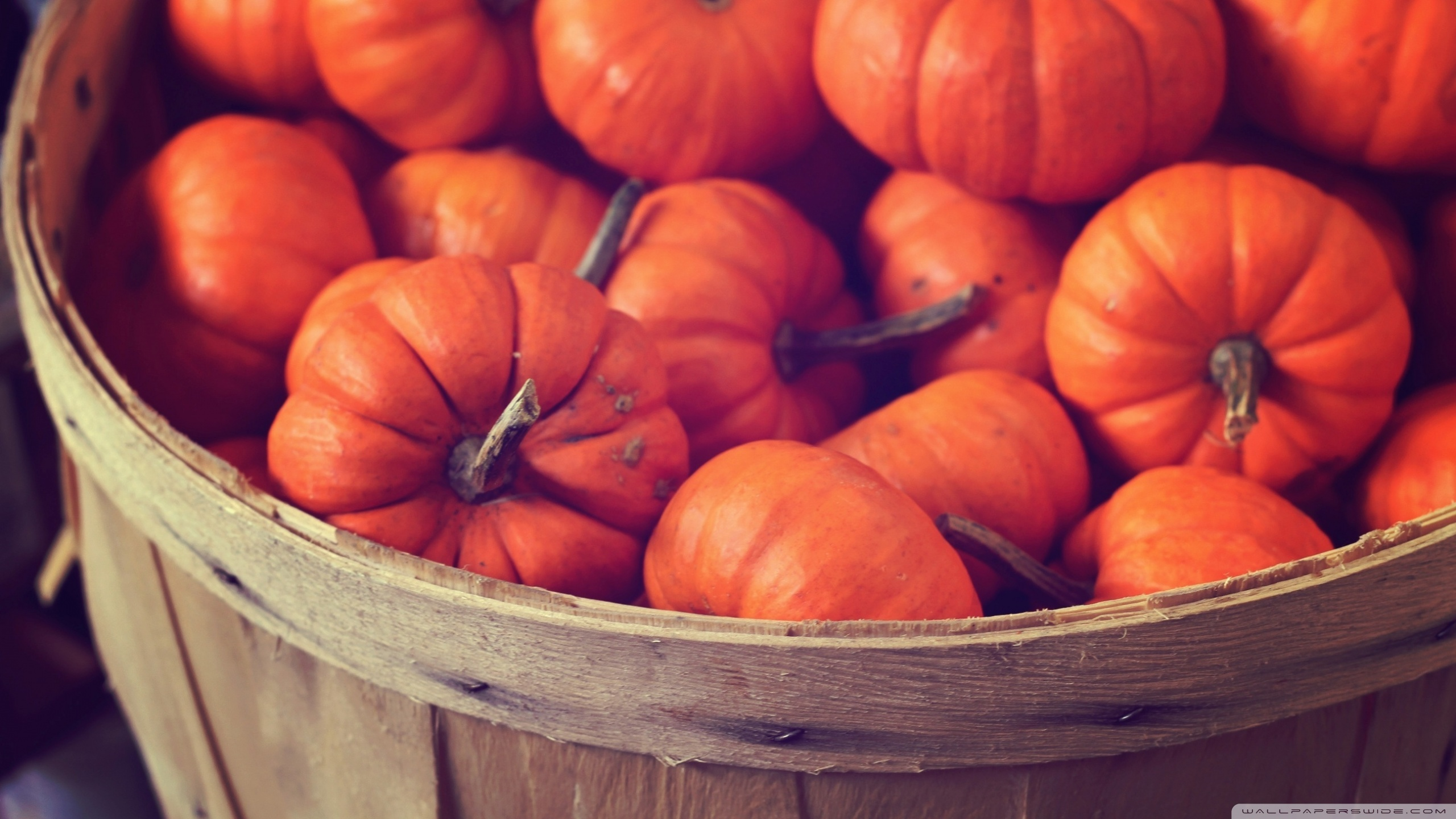Basket Full Of Pumpkins 4K HD Desktop Wallpaper for 4K Ultra HD 2560x1440