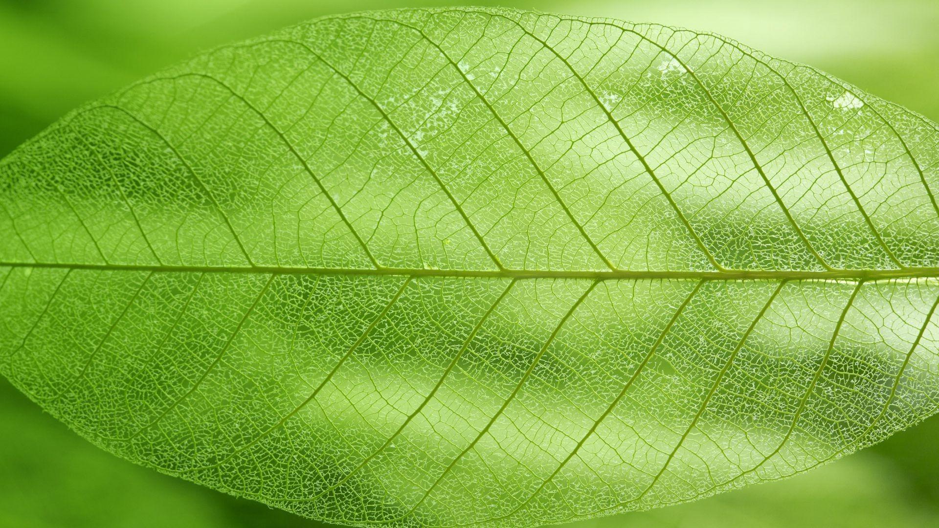 Green leaf wallpaper 8377 1920x1080