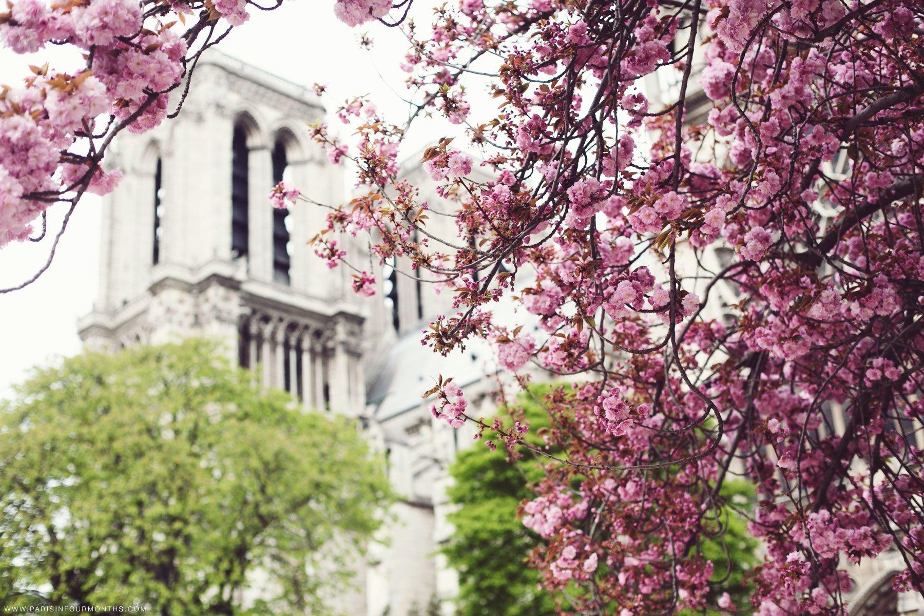 Third Spring Paris in Four Months 1800x1200
