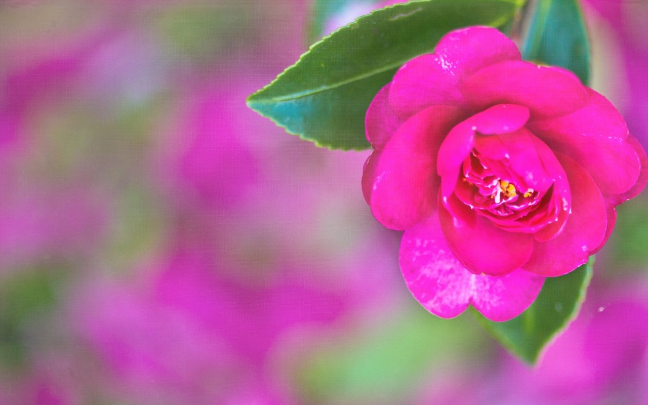 Pretty Pink Desktop 1280x800